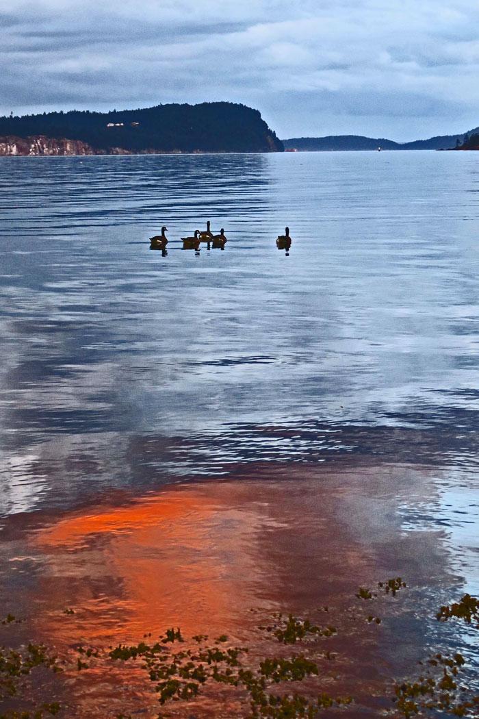 Geese-at-Sunset-(1)eV-web