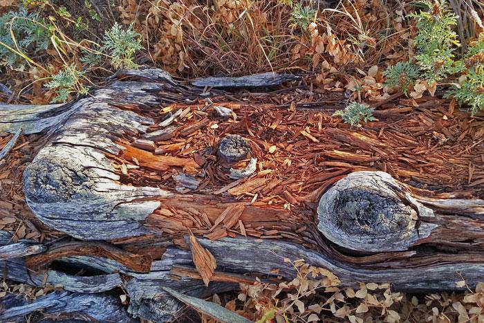Driftwood-Texture-#1-web
