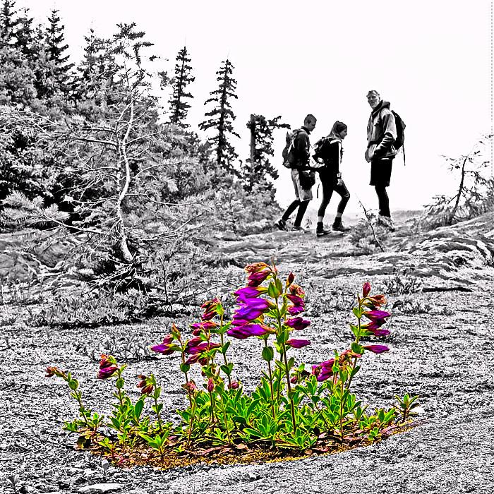 bloomin-hikers-web-1