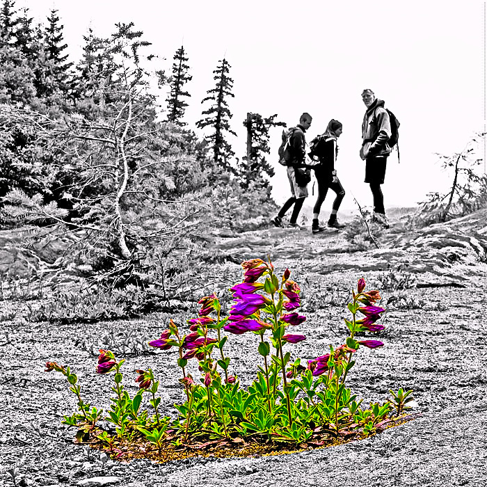 bloomin-hikers-web-1
