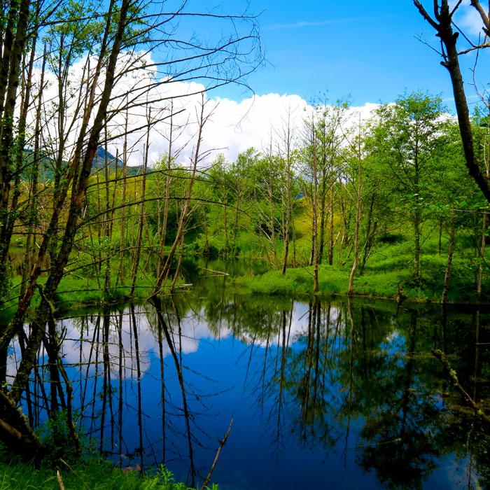 mtsth-pond-web