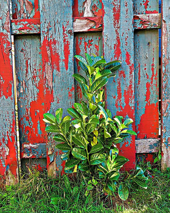 shrub-fence-paint-web