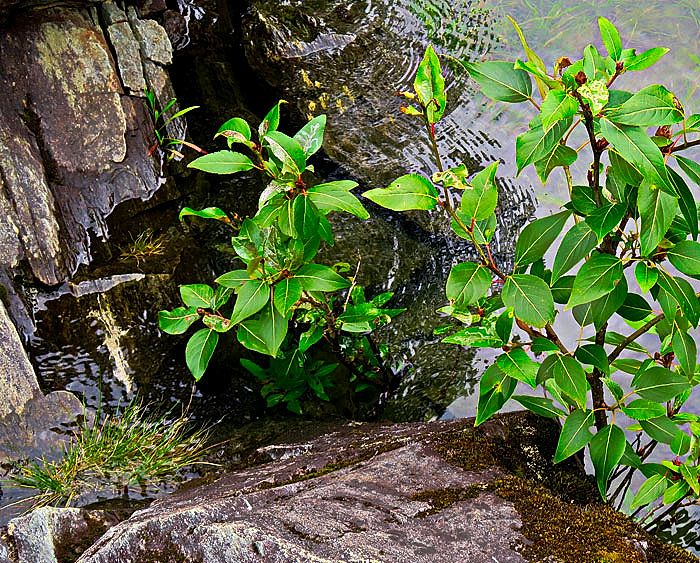 Shrub,Rock,Lake-Crop-web-2.jpg