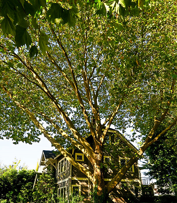 tree-house-web