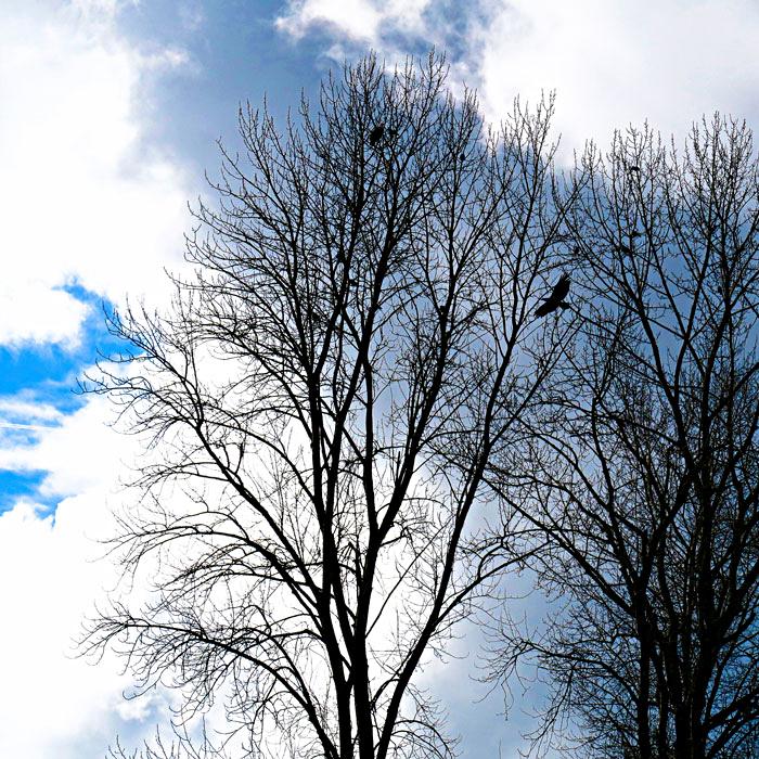 Eagle-Tree-web.jpg