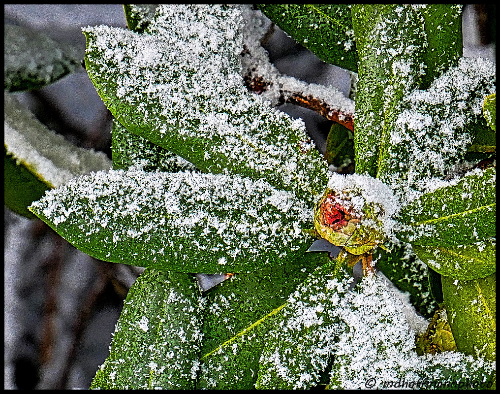 Frosty Bud-web-wmk-1.jpg