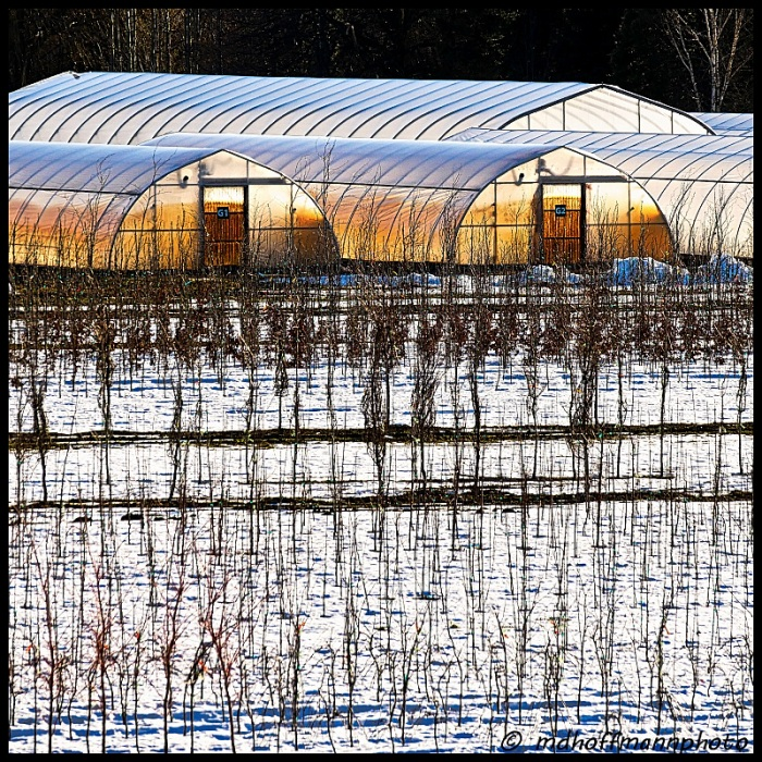 greenhouses-glowing-web
