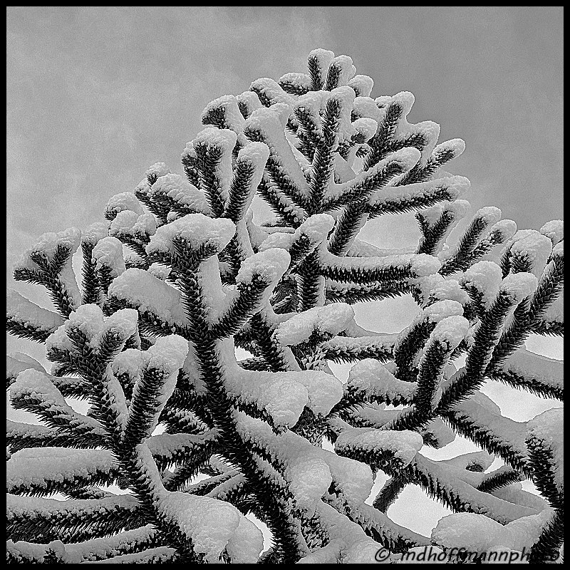 monkey-tree-snow-1-web-1