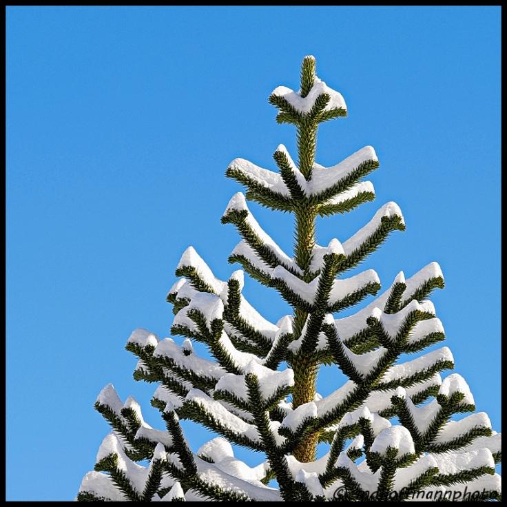 monkey-tree-snow-2-web-1