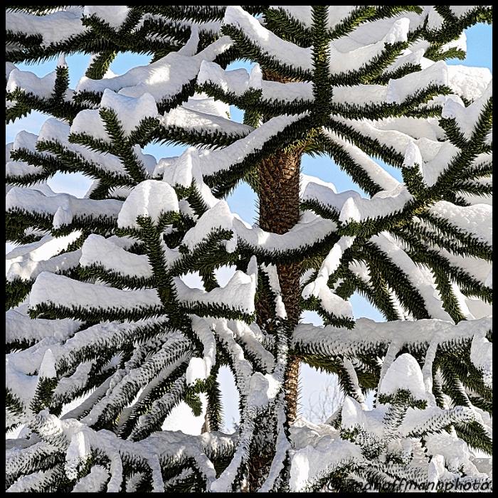 monkey-tree-snow-3-web