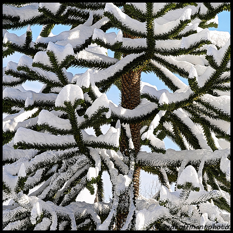 monkey-tree-snow-3-web