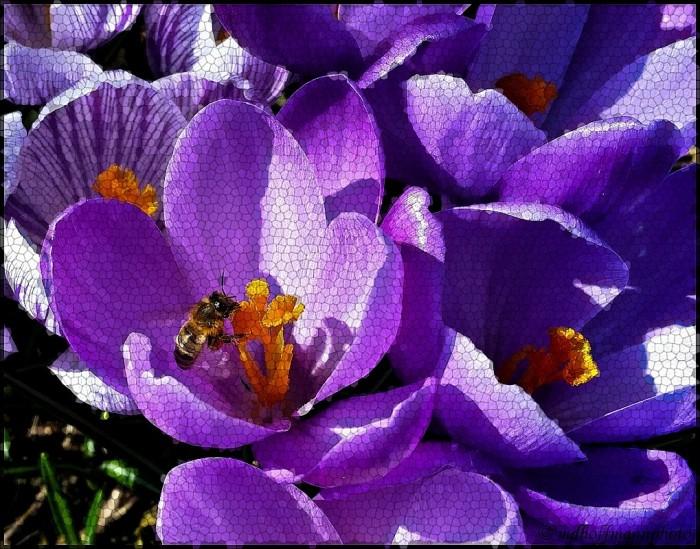 Bee-4-web-Mosaic