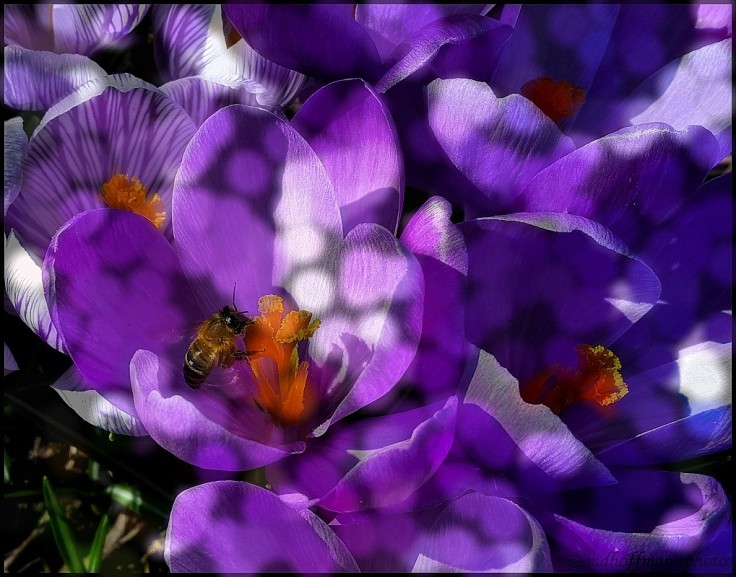 Bee-4-web-WColor
