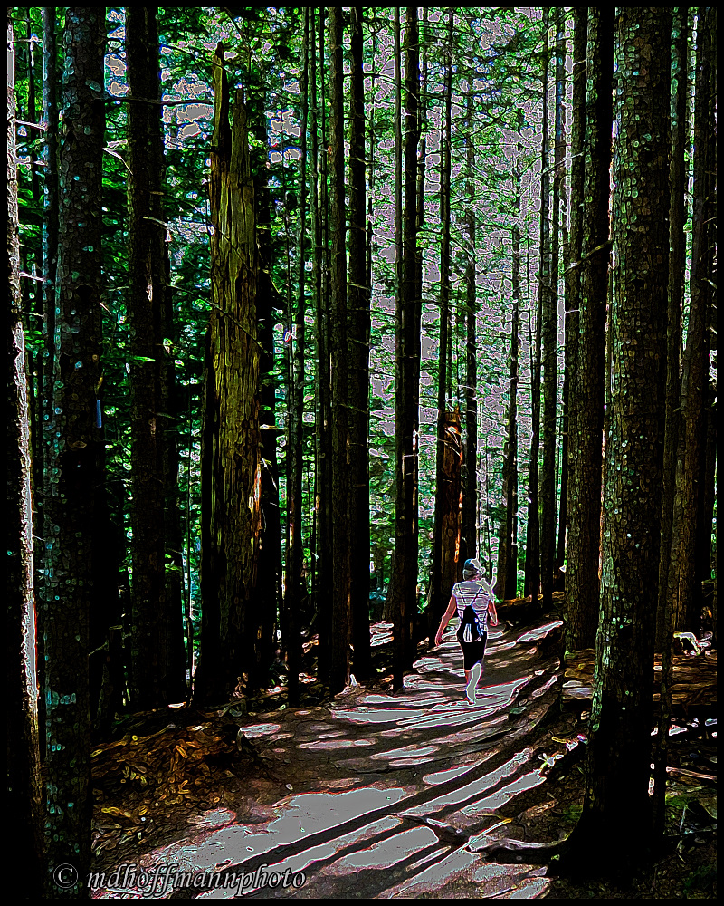 Forest Walk(1)-Poster-web
