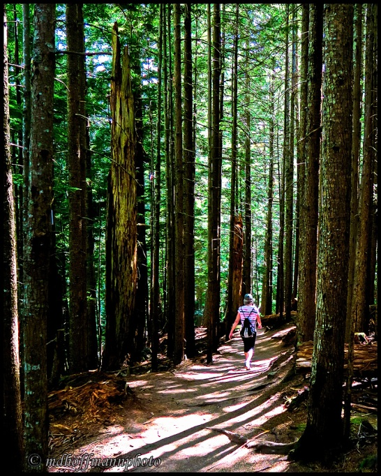 Forest Walk(1)-web