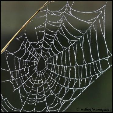 IMG_4777-1-web