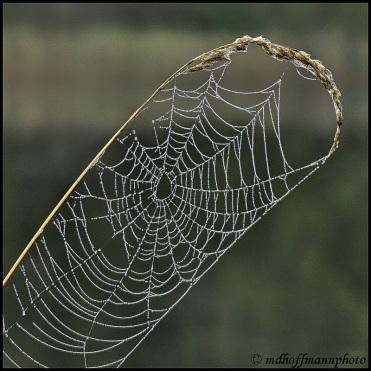 IMG_4777-web