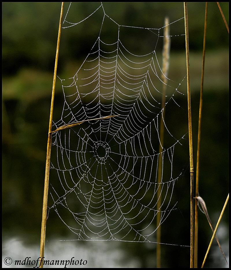 IMG_4782-1-web