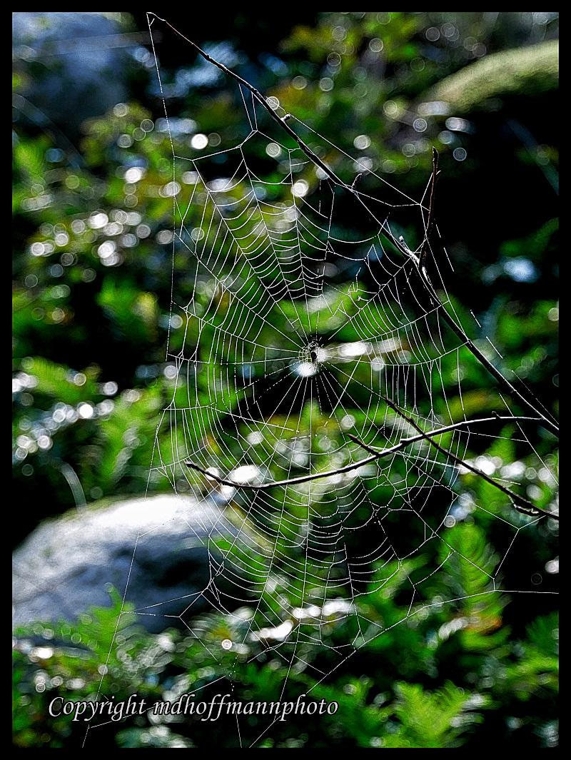 P1090253-web